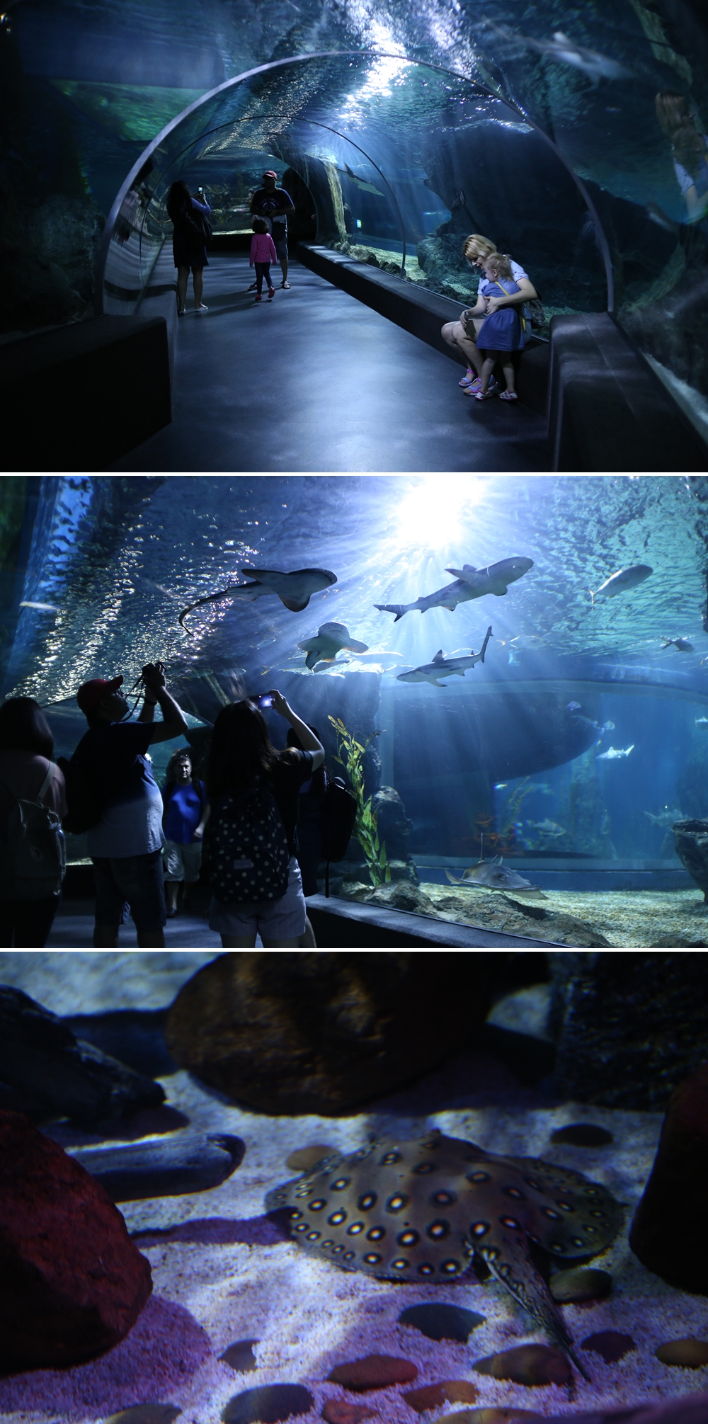 3 World Class Tourist Attractions First In Thailand Et Ticket Sea Life Ocean Aquarium Only Adult They Are Adorable And Loved By Everyone A Species Called Gentoo Is The Worlds Third Largest Trainers Say Very Smart But Cautious